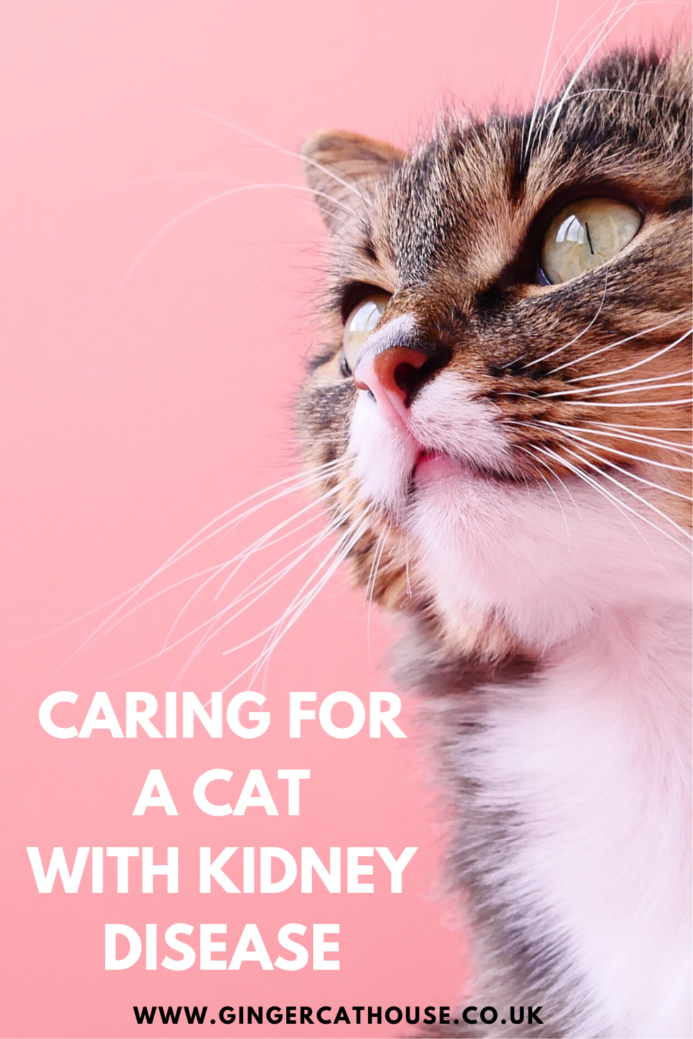 Chronic Kidney Disease in Cats What you need to know in