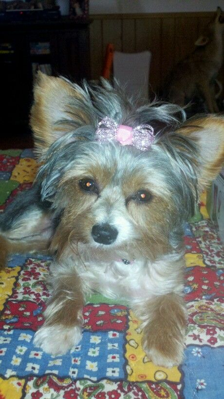 Sharlae, Rockin the bow!!!