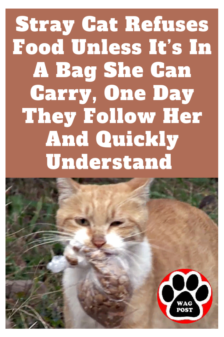 Stray Cat Refuses Food Unless It S In A Bag She Can Carry One Day They Follow Her And Quickly Understand With Images Stray Cat Cats Cats And Kittens