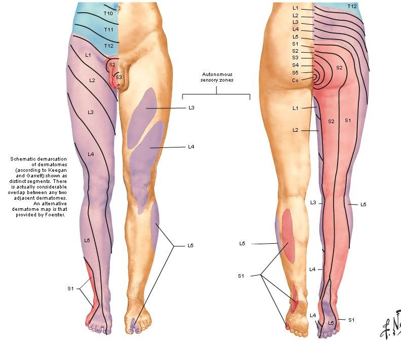 Dermatomes  Myotomes - Google Search Rehab Cruciate ligament
