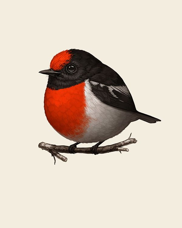 Red Capped Robin By Mike Mitchell Birds Painting Birds