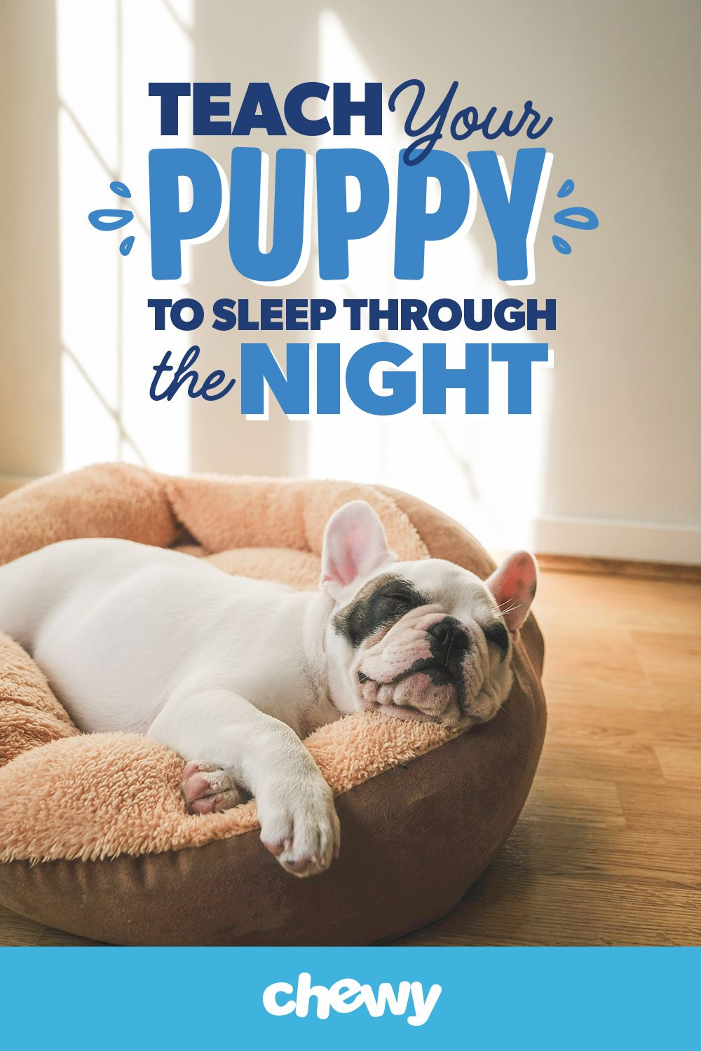 Whether Your Dog Is Just Starting To Have Sleep Issues Or You Re