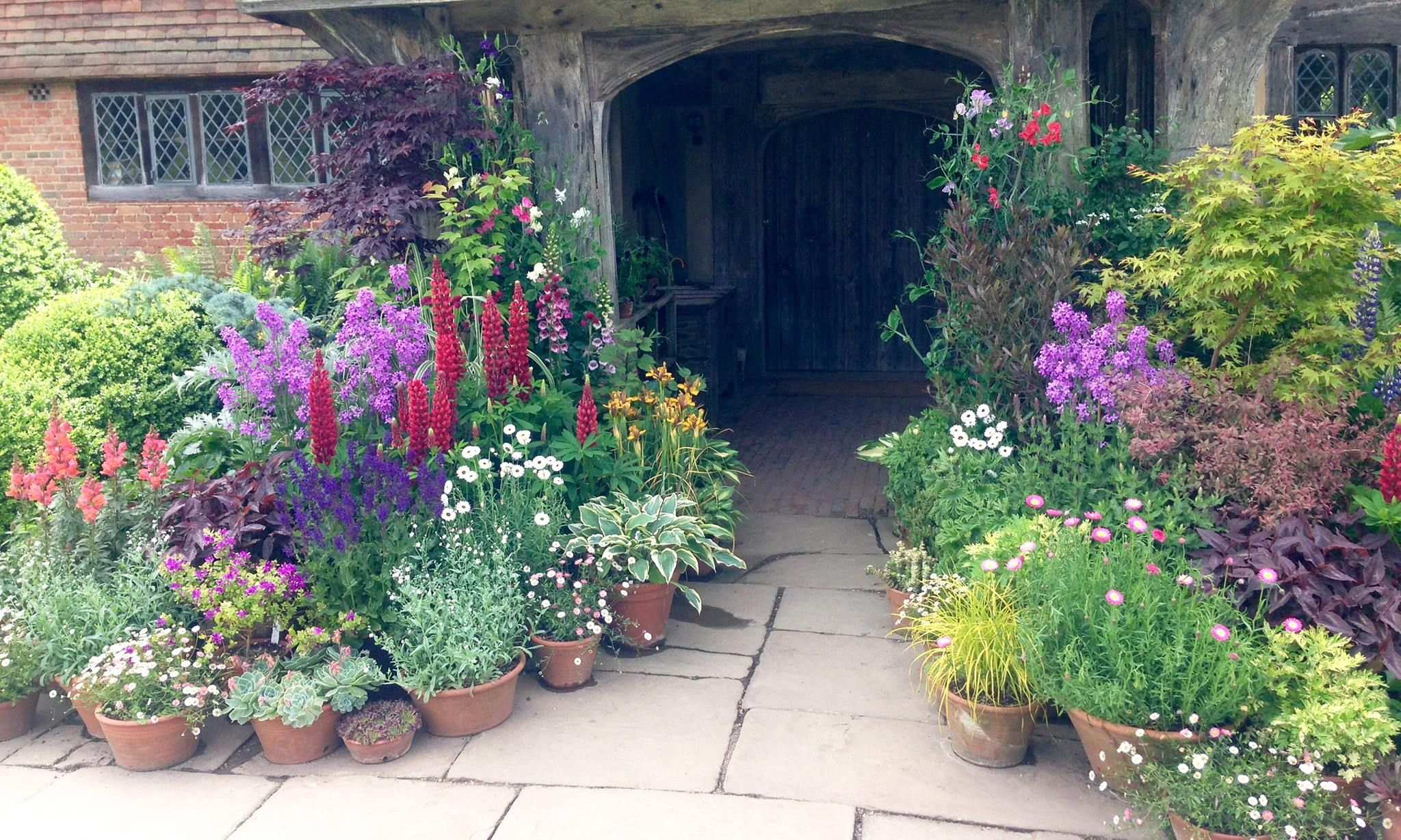 A welcoming display of container plants at