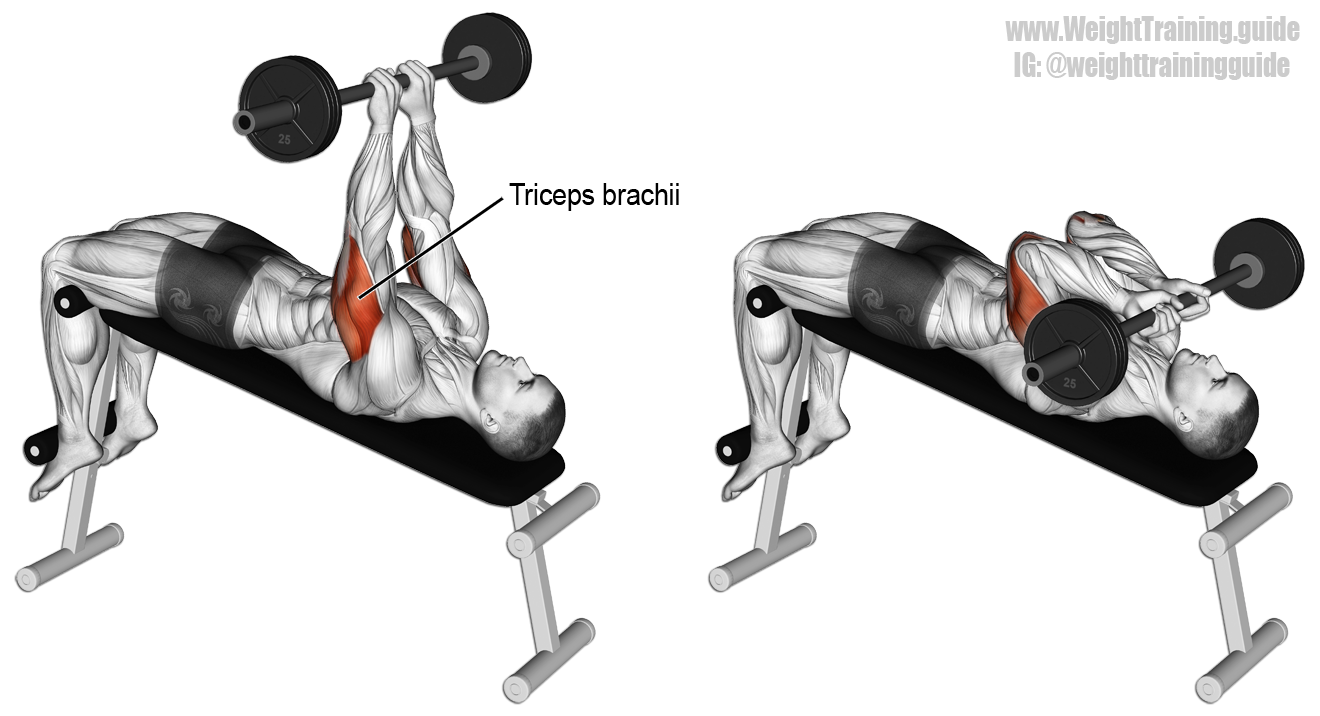 Decline skull crusher. An isolation exercise. Target muscle ...