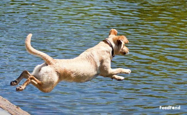 Dog Training Collar Decreases Jumping Dog Training Collar Reviews