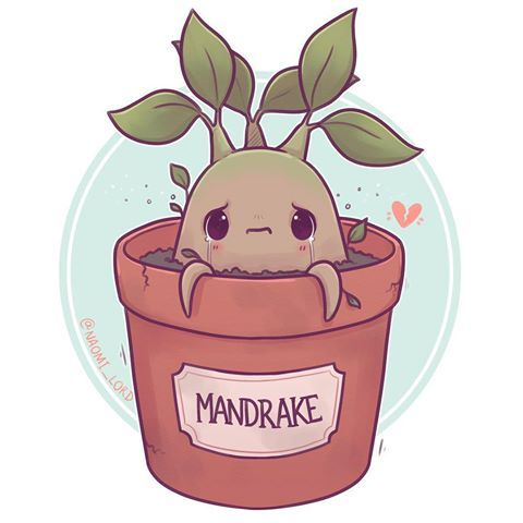 Have A Little Mandrake 3 What Are Some Other Hp Plants I Can