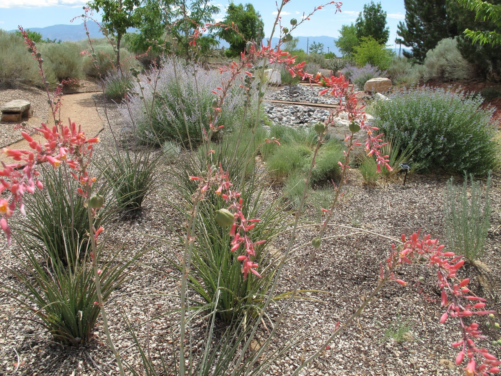 Texas landscape plants center for landscape water for Low maintenance desert plants