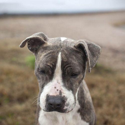 Mary Shannon Johnstone's Landfill Dogs Photo Series - Dog Milk