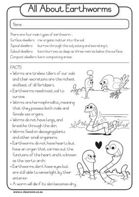 All about earthworms second grade pinterest school homeschool all about earthworms second grade pinterest school homeschool and kindergarten science ccuart Images