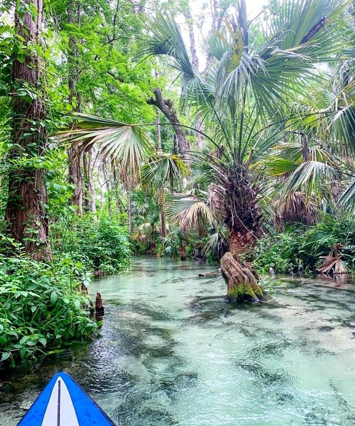 Photo of You Will Feel Like You're In The Amazon While Kayaking Down This 8.5 Mile River In Florida (PHOTOS)
