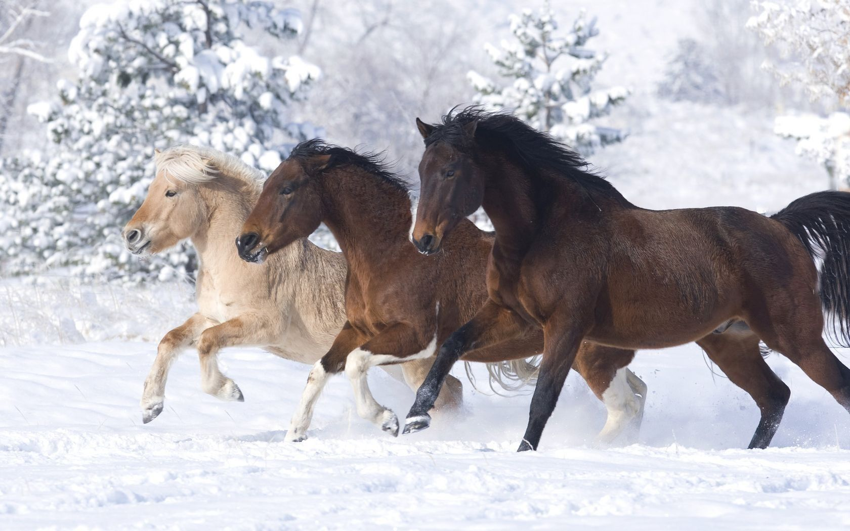 Simple Wallpaper Horse Winter - 0a04cc42a8975ba6668a309e63d6b46f  Pictures_93628.jpg