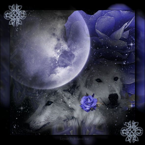 White Wolf With Purple Eyes White Wolf with...