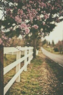 Beautiful Spring Wallpaper Cute Wallpapers Iphone Wallpaper