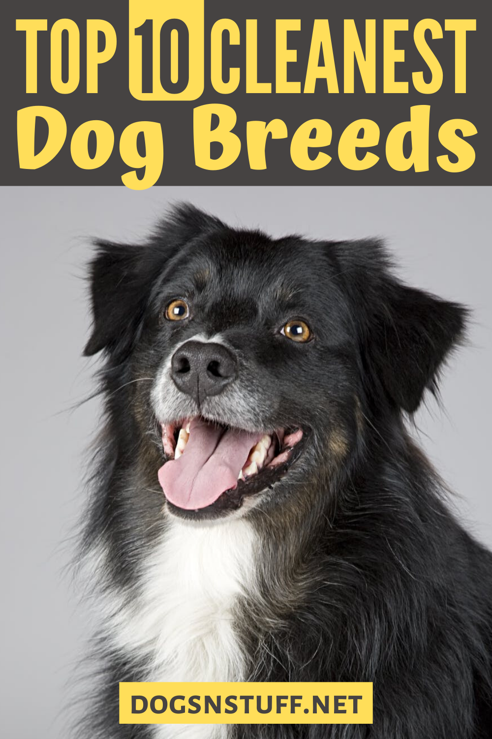 10 Cleanest Dog Breeds Neat Freaks Should Own Dogs N Stuff In 2020 Dog Breeds Big Dog Little Dog Dog Has Diarrhea