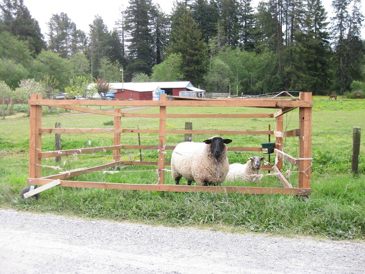 Portable sheep pens