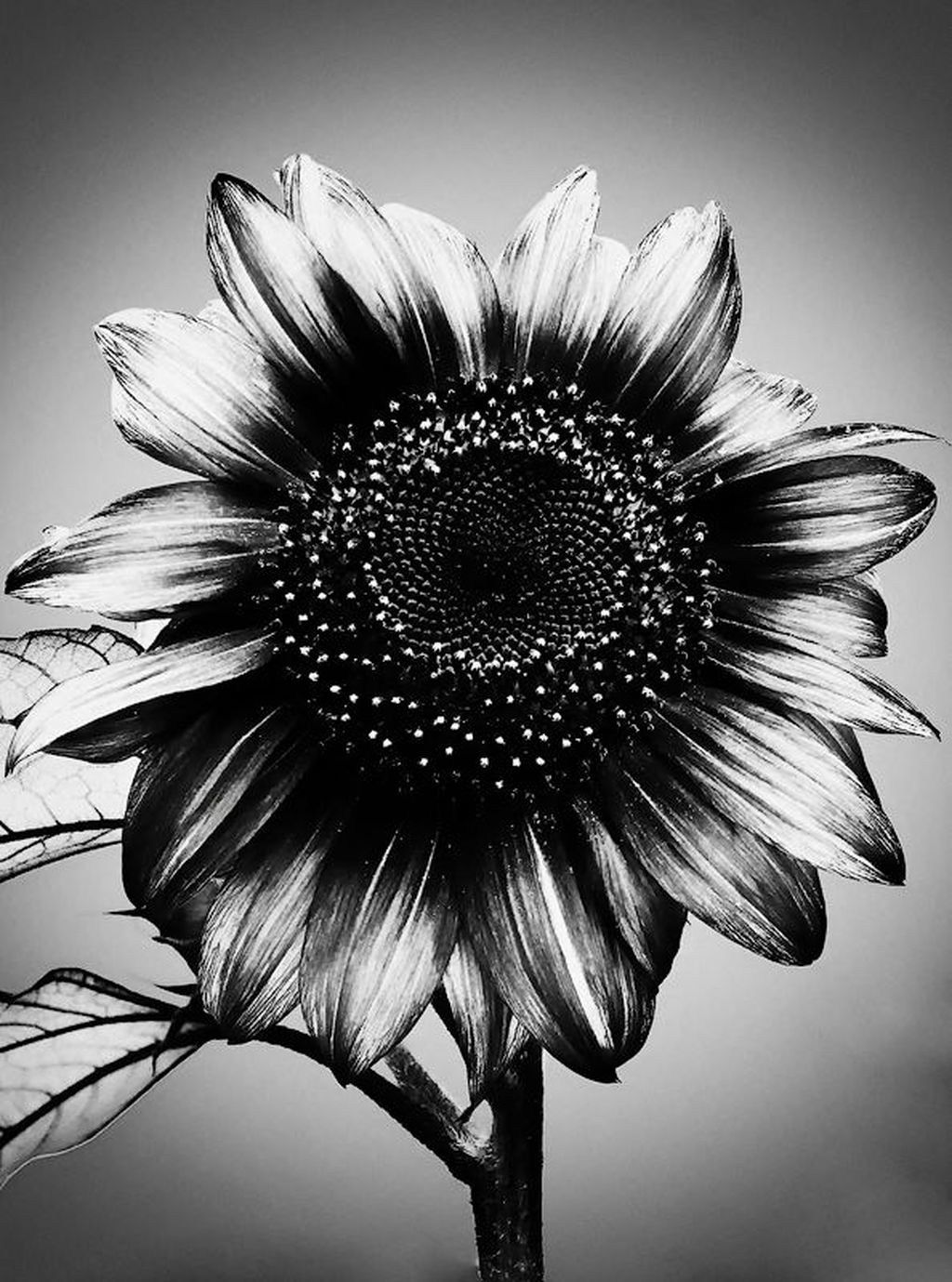 28 impressive black and white sunflower tattoo tattoos