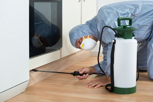 What Are the Advantages of Hiring Professionals for Home Pest Control?