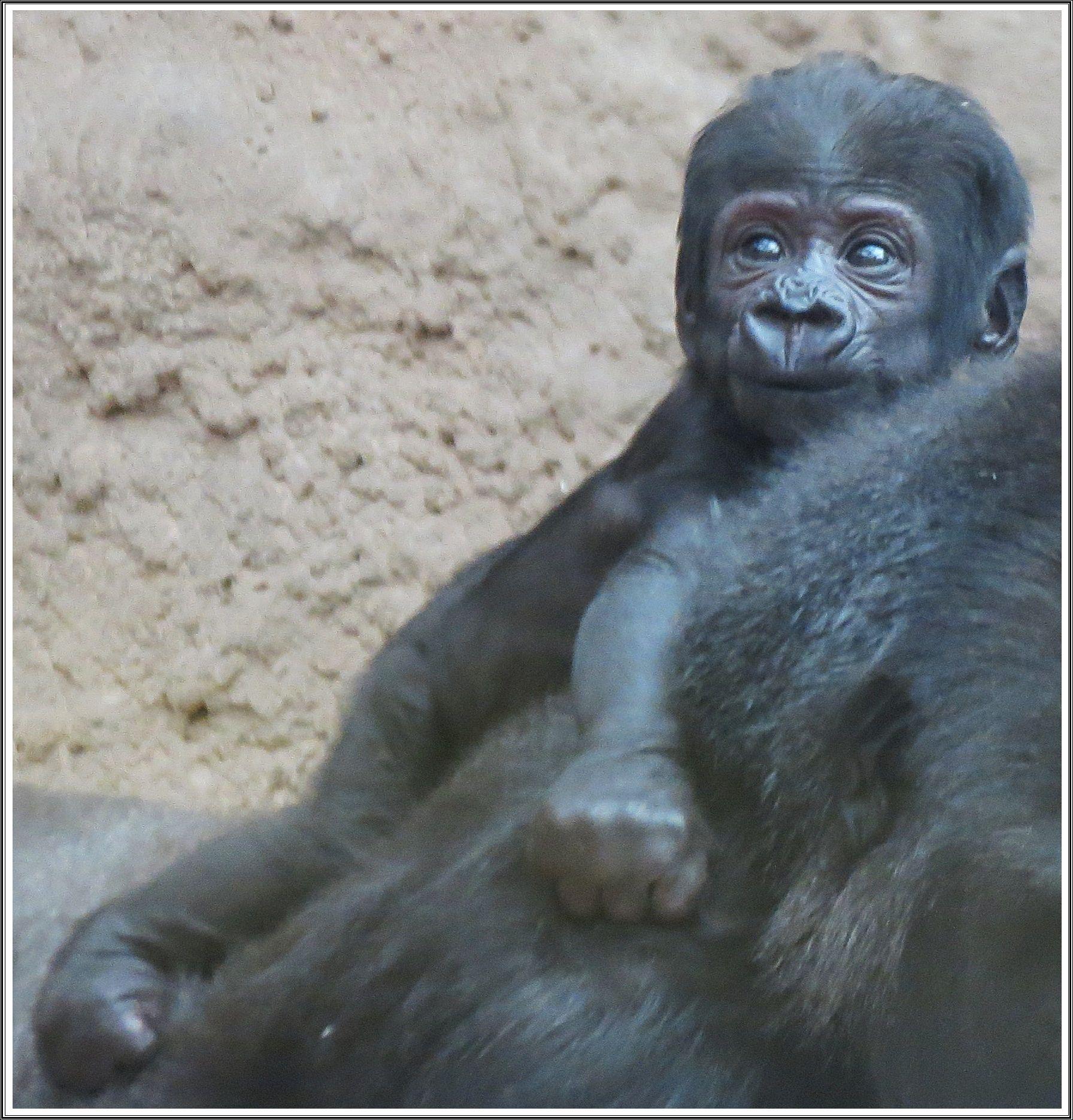 Ajabu Zoo Praha Prague Zoo Zoo Pinterest Prague Zoo A Prague