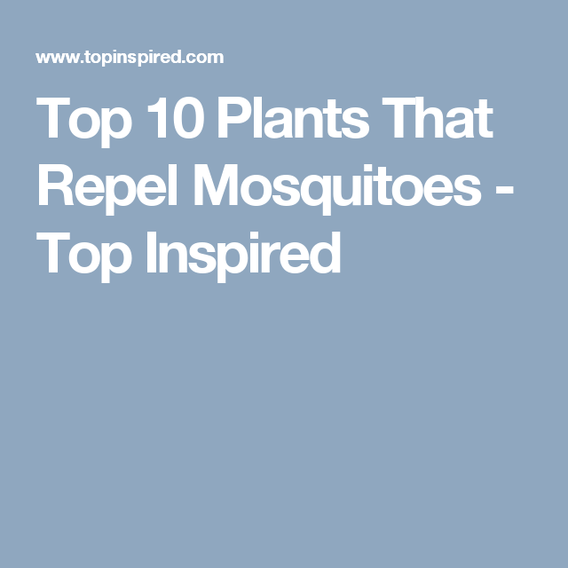 inspiration house plants that repel bugs. Top 10 Plants That Repel Mosquitoes Gardens and Mosquito  inspiration house The Best 100 Inspiration House Bugs Image