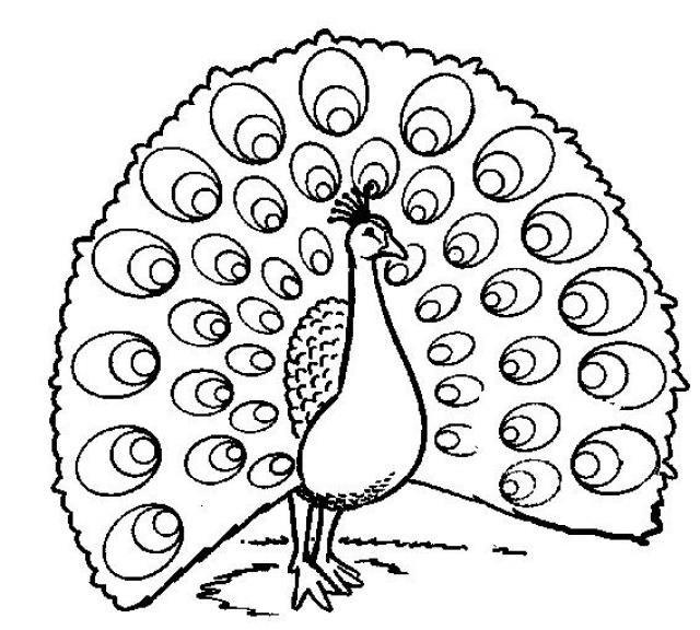 afbeeldingsresultaat voor pauw tekening pauw