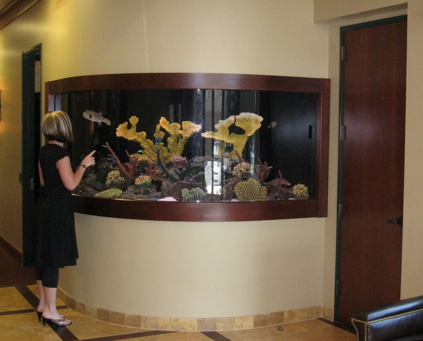 Nice salt water fish tank to include in ur home dream for Dream of fish tank