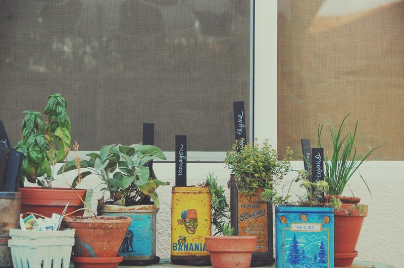 Ideas Huerto y Jardín