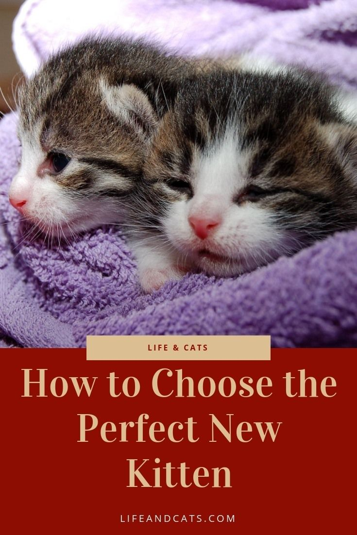 Choose the perfect new kitten for your family What to look for in a new kitten Select a kitten that will fit in your family and your life