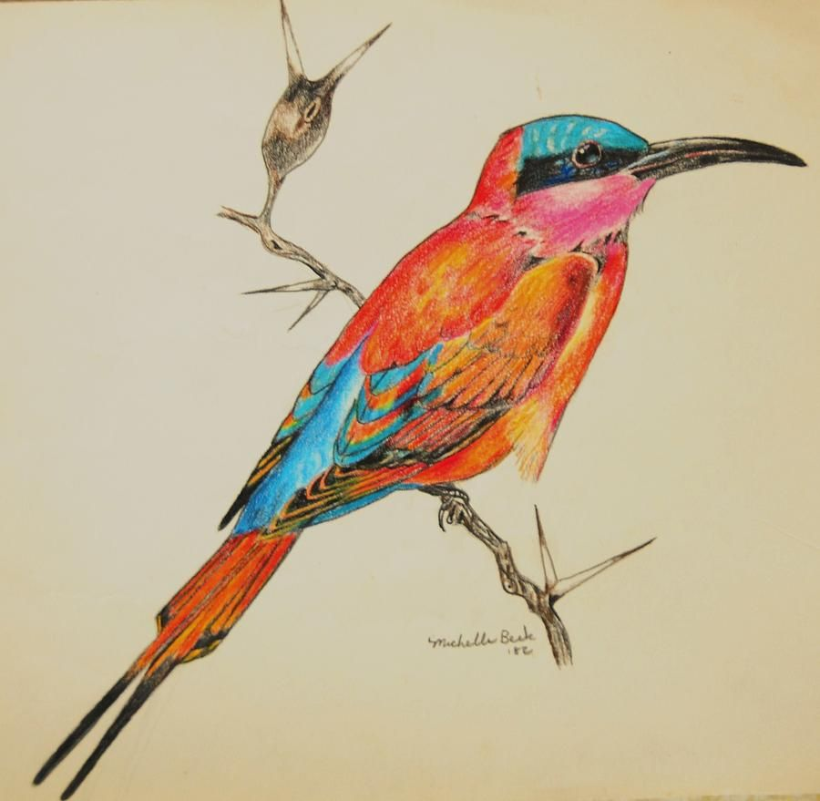 Beautiful bird drawings bird art drawings birds tropical birds colored pencil drawings bird