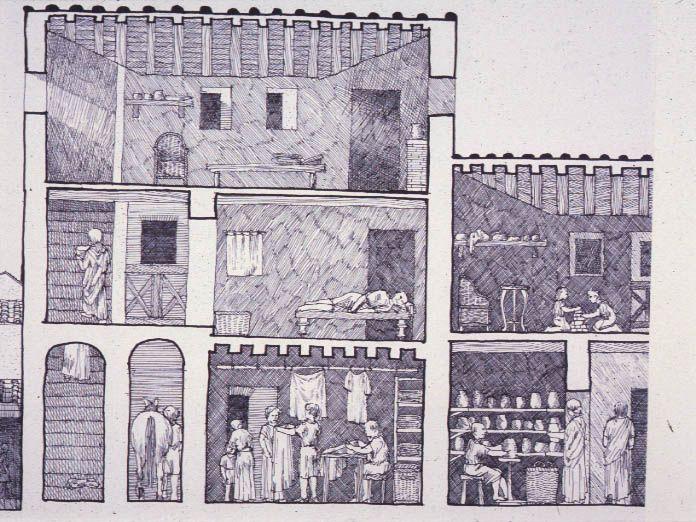 Cross Section Of An Insula David Macaulay Ancient