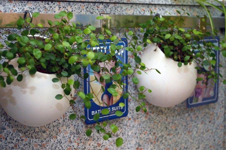 planzenampel f rs vertical gardening ein ikea diy mit asker beh ltern. Black Bedroom Furniture Sets. Home Design Ideas
