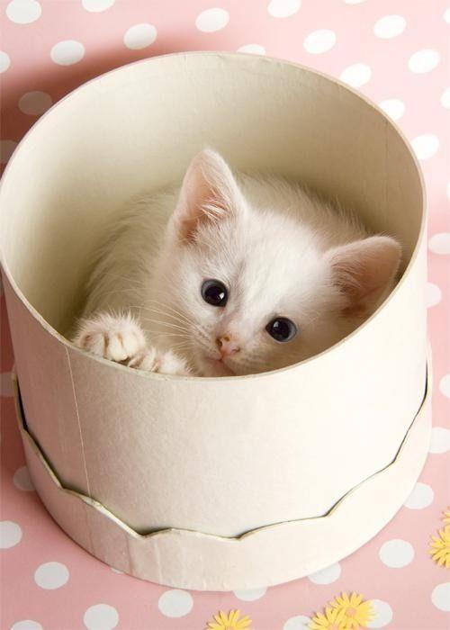 Cat Circles: Why Are So Many Cats Irresistibly Drawn To Circles