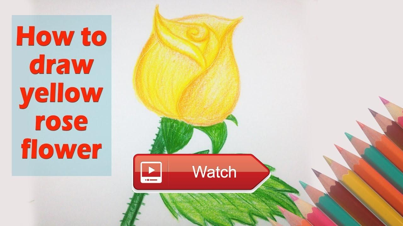 How To Draw Yellow Rose Flower Drawing A Beautiful Flower Video Art For  Tutorial