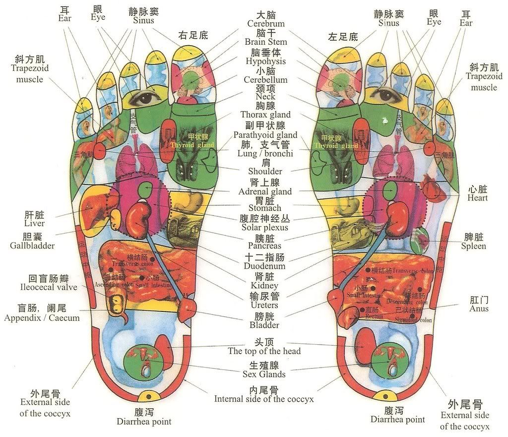 A pretty good and accurate reflexology chart. Use a small stone ...