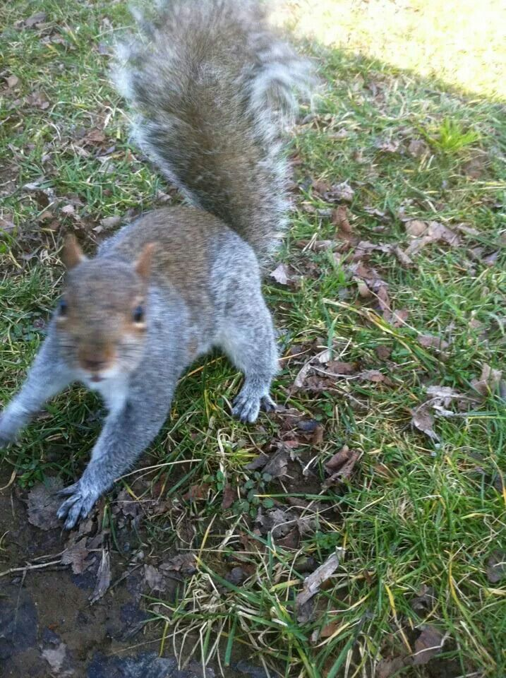 The Squirrel that attacked me... Washington,  DC