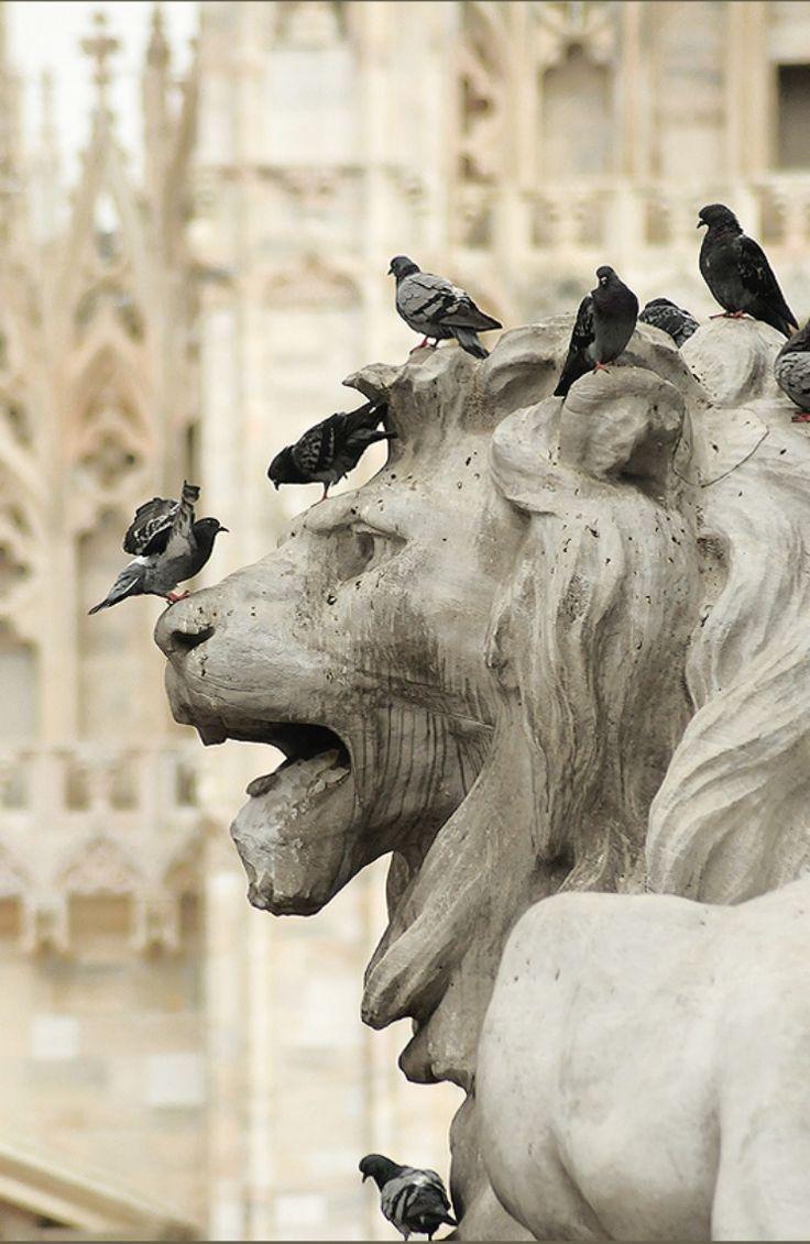 Duomo Lion with Pigeons. Milan, Italy