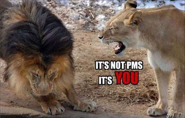 30 Funny animal captions - part 12 (30 pics) #animalcaptions 30 Funny animal captions - part 12 (30 pics) #animalcaptions