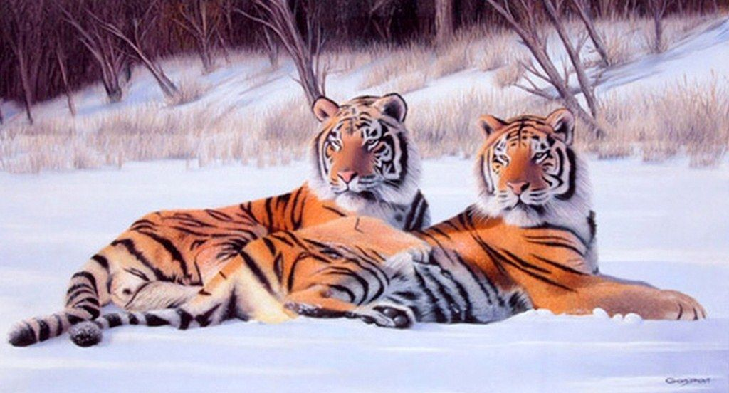 Paisajes De Animales: Resultado De Imagen Para Paisajes Hermosos De Animales