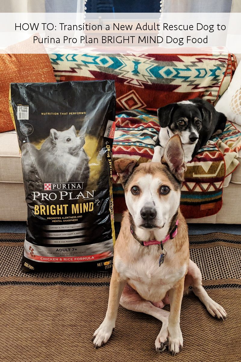How To Transition To New Dog Food Purina Pro Plan Bright Mind
