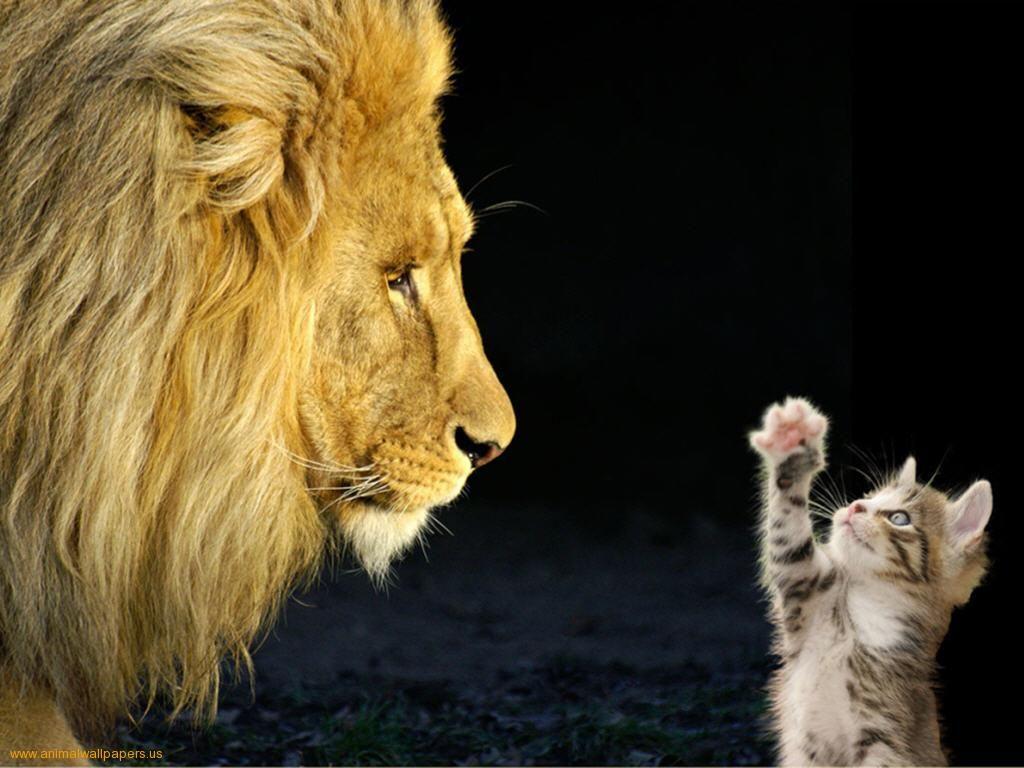 big men meet tiny cats that dont grow