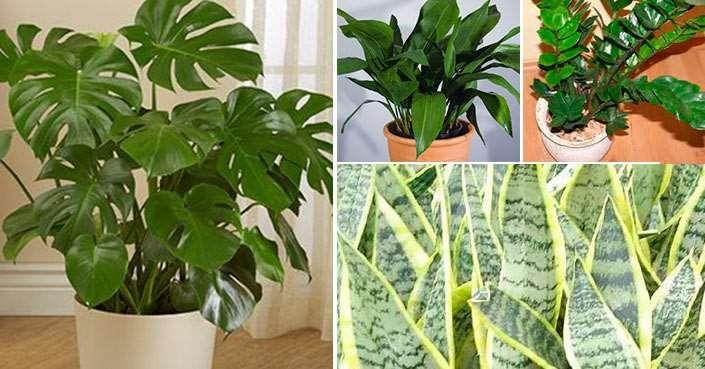 Plantas de interior que necesitan poca luz https - Plantas de interior que necesitan poca luz ...