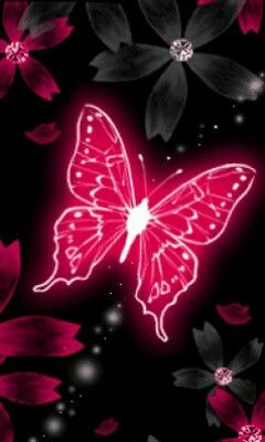 Black And Pink Butterfly Wallpaper Butterfly Illustration Butterfly Art