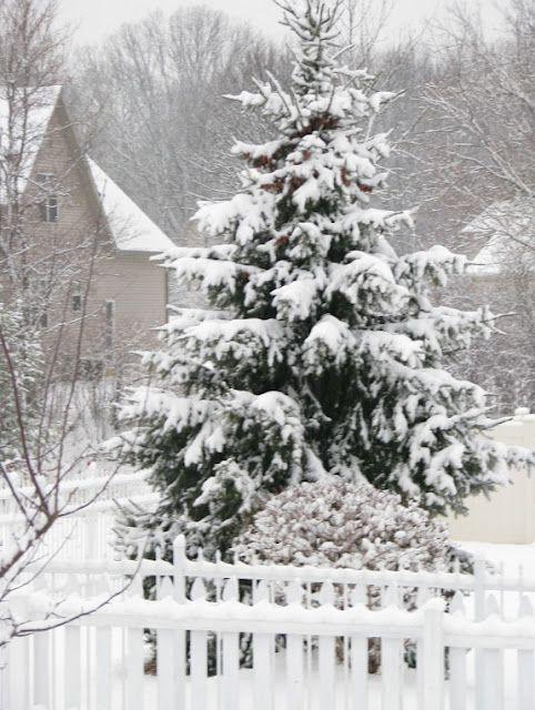 Snow,Snow