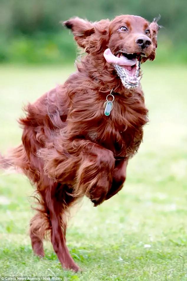 Эти фотографии собак наполнят вас радостью! в 2020 г ...