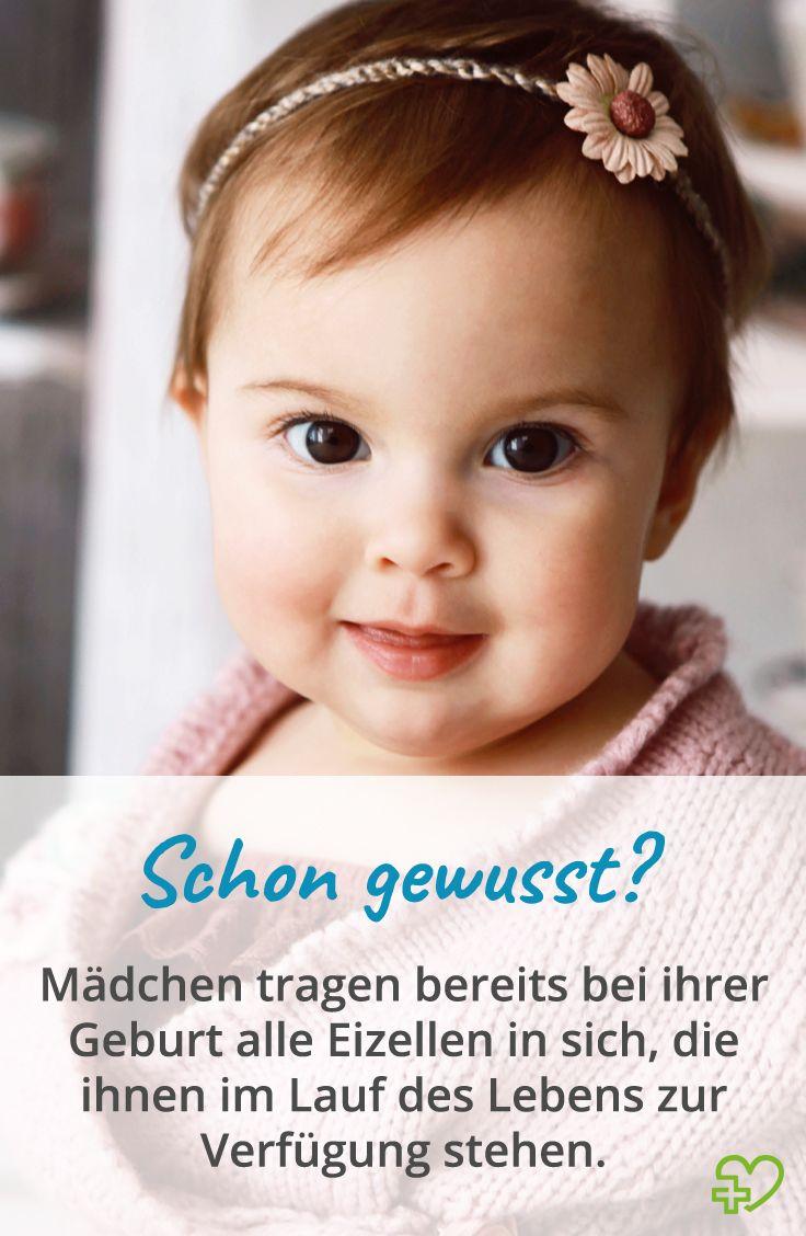 Weibliche Geschlechtsorgane – Anatomie der Frau Innere ...