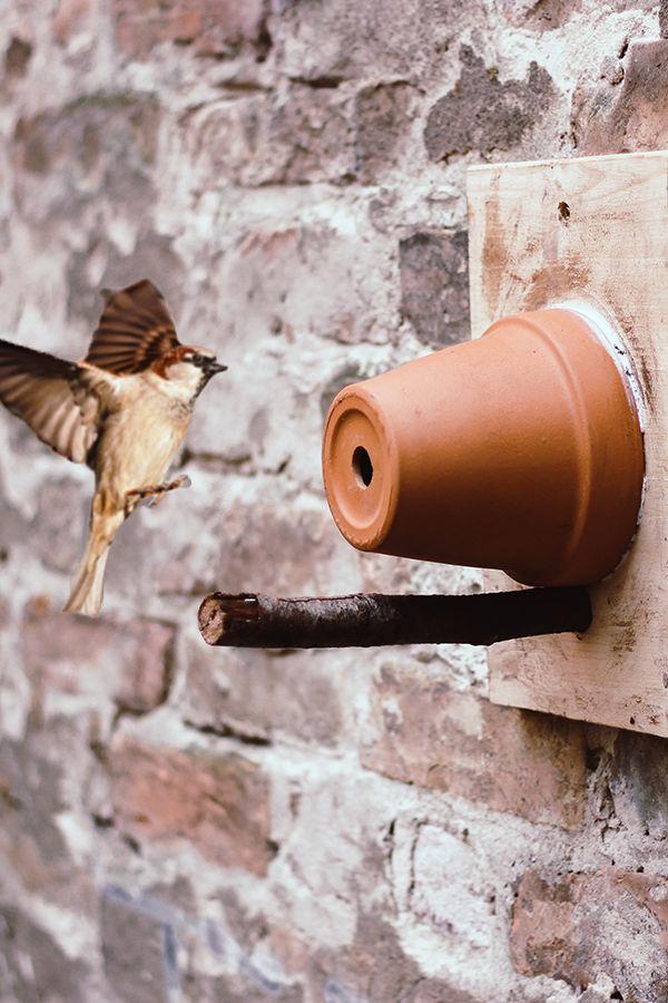 Vögel verfügen in der freien Natur über immer weniger Nist- und Brutmöglichkeiten. Ein Nistkasten stellt daher für viele Vögel eine willkommene Alternative dar. Der perfekte Zeitpunkt um einen neuen Nistkasten aufzuhängen ist dabei im Spätherbst bis Winter. Wir zeigen dir, wie du einen Nistkasten ganz einfach selber bauen kannst.