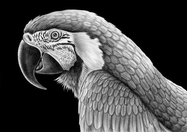 karakalem-cizim-resimler.jpg (640×450)