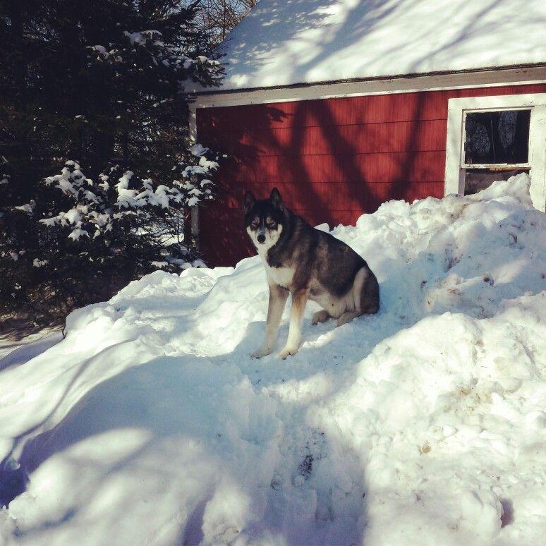 Brady loves his snow!