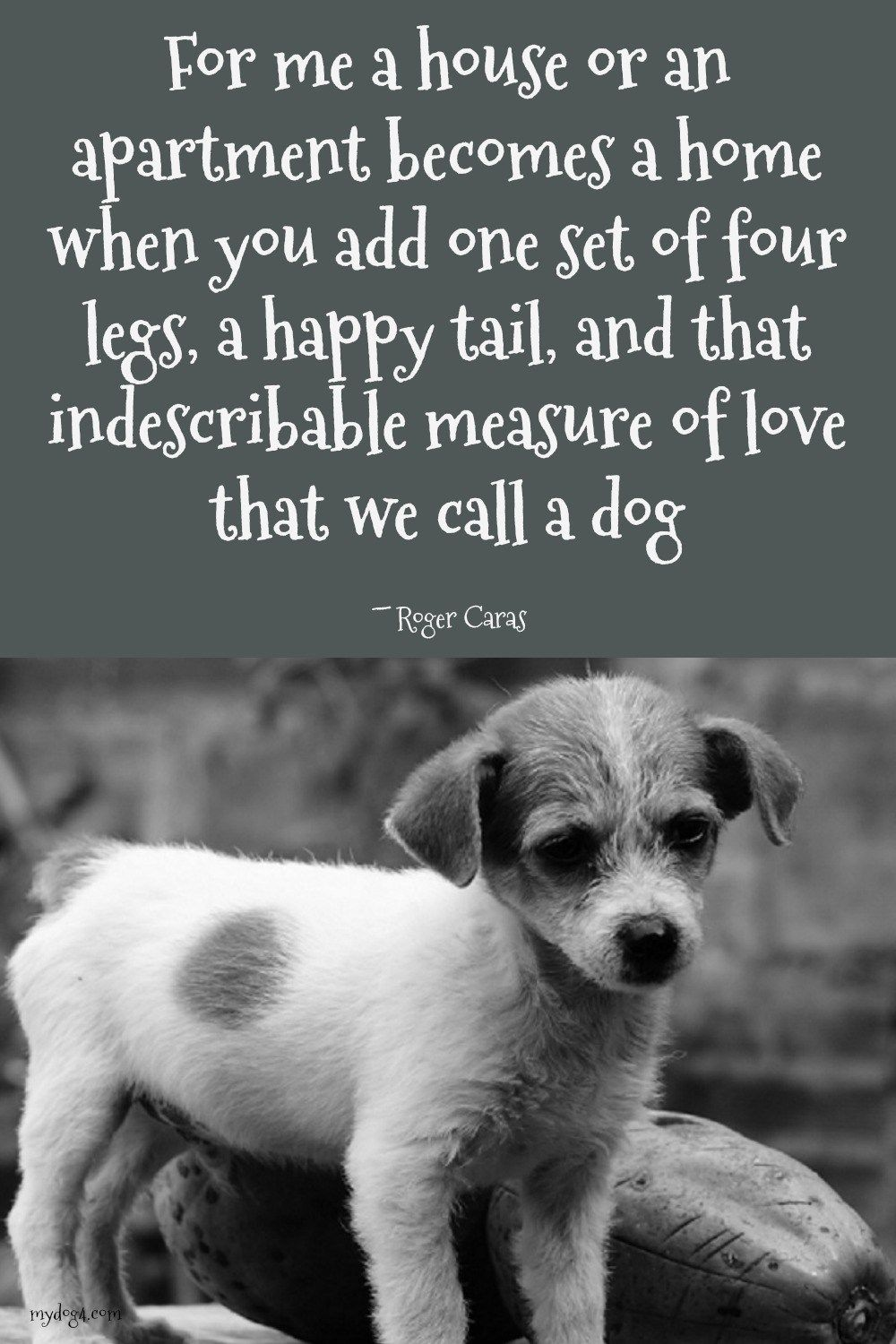 dog quotes a snorkey day dogs dog quotes love dogs dog quotes rh pinterest com