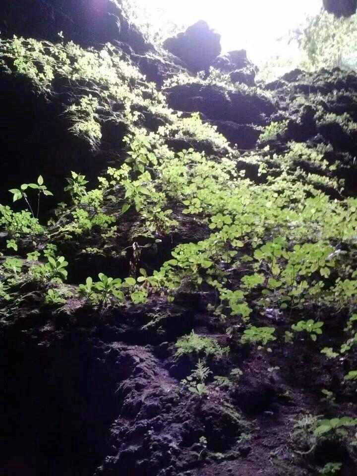 Las Cuevas de Camuy,P.R.
