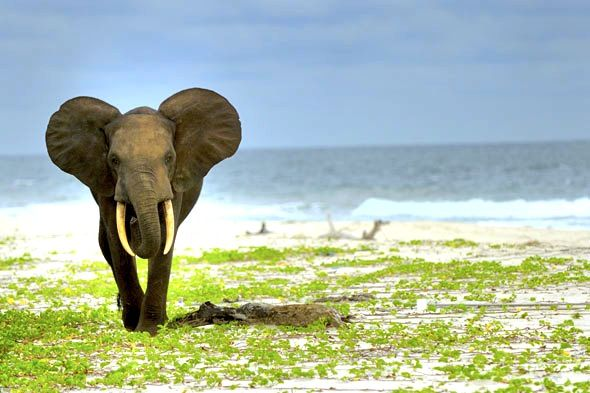 Loango National Park, in Gabon    where the animals come to